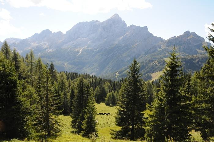 [50] Pferdealm unterhalb des Monte Pelmo ©Kalle Kubatschka © Deutscher Alpenverein Sektion Rheinland-Köln