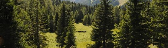 [50] Pferdealm unterhalb des Monte Pelmo ©Kalle Kubatschka