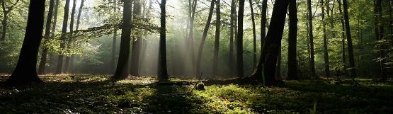 [202] Der Wald im Nationalpark Eifel ©Wald und Holz NRW
